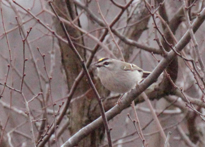 White river national wildlife refuge memos for me for 242 terrace ave riverside ri