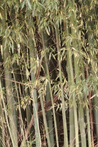 1-5 (3) Bamboo