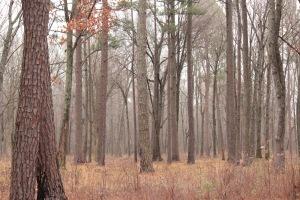 1-2-5 trees2