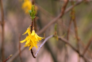 5-flowers