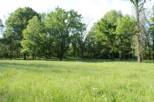 Menard Mounds8 4-24