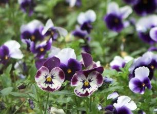 Garvin Gardens 02 041418