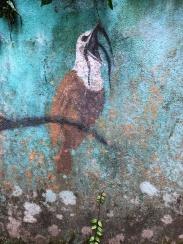 Three-wattled Bellbird artwork