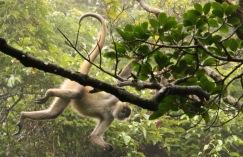 *Monkeys6 062819 Rincon De La Vieja National Park