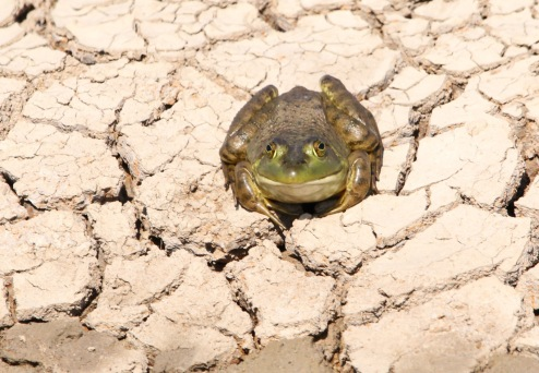 Toad 042819 BKNWR