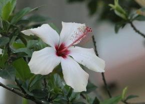 *Flower 1 060119 Monteverde