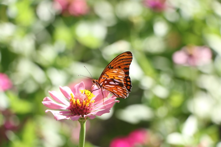 Butterfly4 ASU Gardens 073017