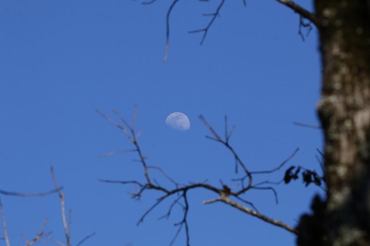 Moon 031619.JPG