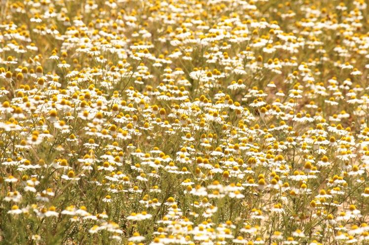 Flowers2 042316 BKNWR